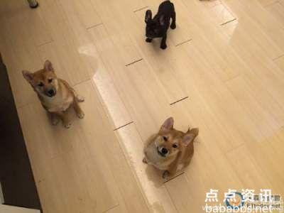 袁弘张歆艺将于德国古堡办婚礼 婚纱照宠物狗出镜