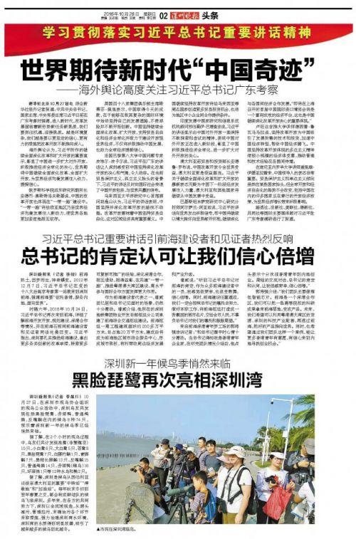 场面壮观!数千只鸬鹚清晨飞临深圳湾海域